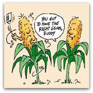 GMO-Right Genes
